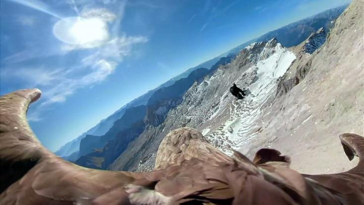 """Egy rétisas """"szemén"""" át mutatják meg az Alpok pusztuló gleccsereit"""