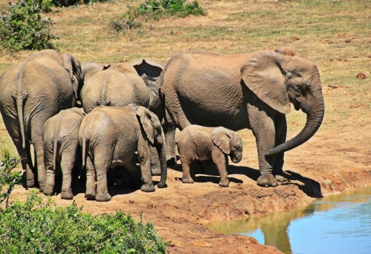 35 elefánttal fizet széthulló gazdaságáért a zimbabwei kormány