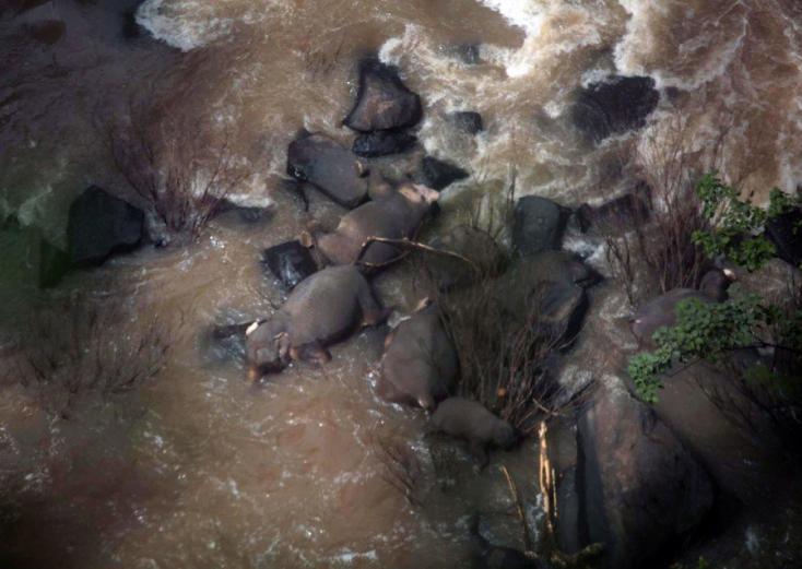 Tizenegy elefánt pusztult el Pokoli szurdokban