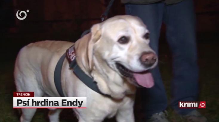 Endy, a labrador mentette meg a 82 éves asszony életét