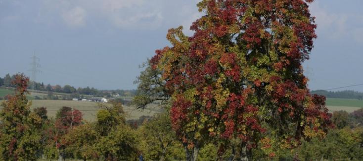 Faültetés a fák világnapján az Alsó-Csallóközben