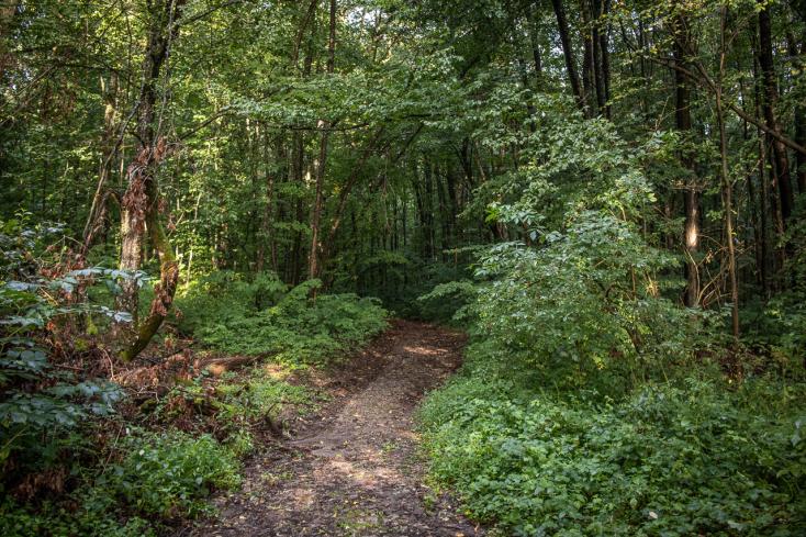 Ismét felfegyverzik az erdészeket Romániában