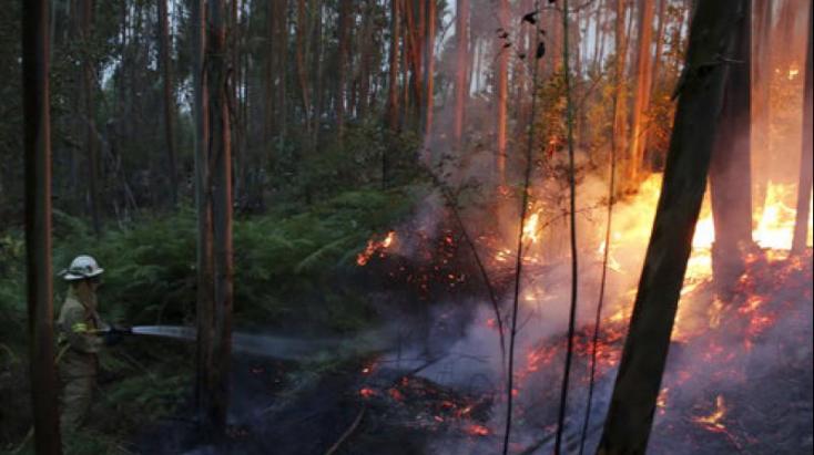 A rendőrség őrizetbe vett egy férfit, aki gyaníthatóan az erdőtüzeket okozta