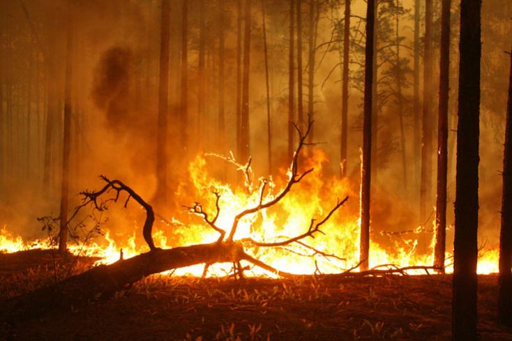 Továbbra is tucatnyi helyen pusztít az erdőtűz Délnyugat-Törökországban