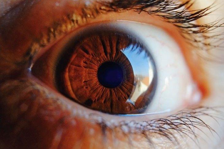 Algákban termelődő fehérje segített részlegesen visszaadni egy férfi látását - Blikk
