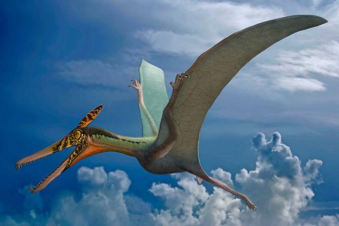 """A déli féltekén is éltek """"repülő sárkányok"""" 160 millió éve"""