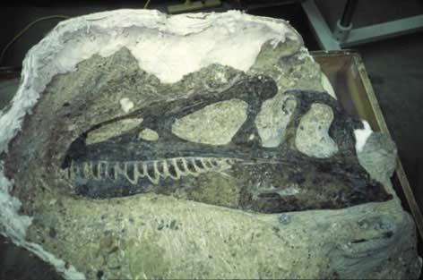 Rábukkantak a modern kori bálna ősére, négy lába volt