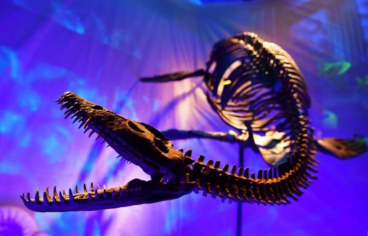 Lába kelt néhány dinoszaurusztojásnak