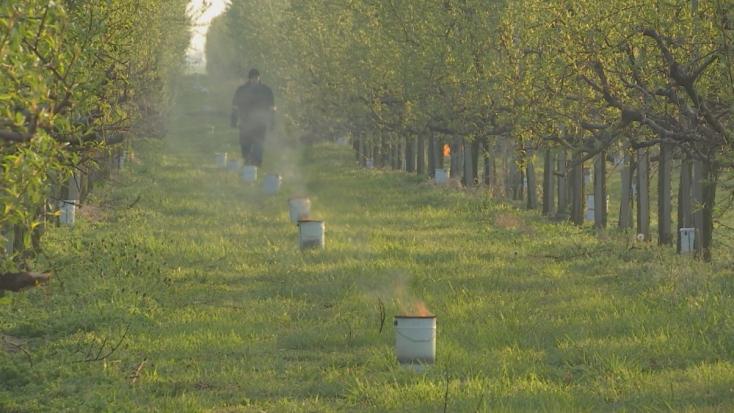 Egy éjszakára 10 ezer euróba kerül a perbetei gyümölcsös fagyvédelme