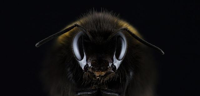 Nyolcszor olyan gyors a rovarfajok kihalása, mint a gerinceseké