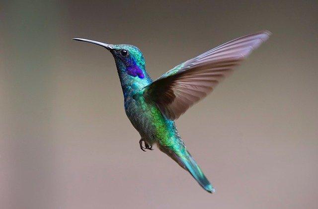 Szokatlan siker lett az okos-madáretető egy adománygyűjtő portálon