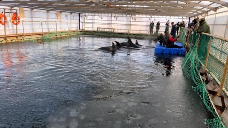 """A neves óceánkutató a """"cetbörtönben"""" tartott fehér és kardszárnyú delfinek elengedését kérte Putyintól"""