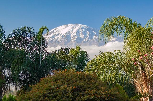 Betiltották a fakitermelést a Kilimandzsáró környezetében lévő erdőkben