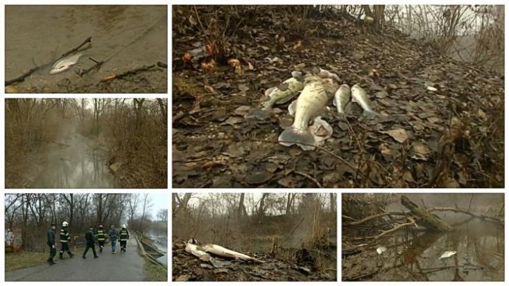 Ökológiai katasztrófa a Kis-Dunán: A horgászok gyanítják, ki engedhetett mérget a vízbe