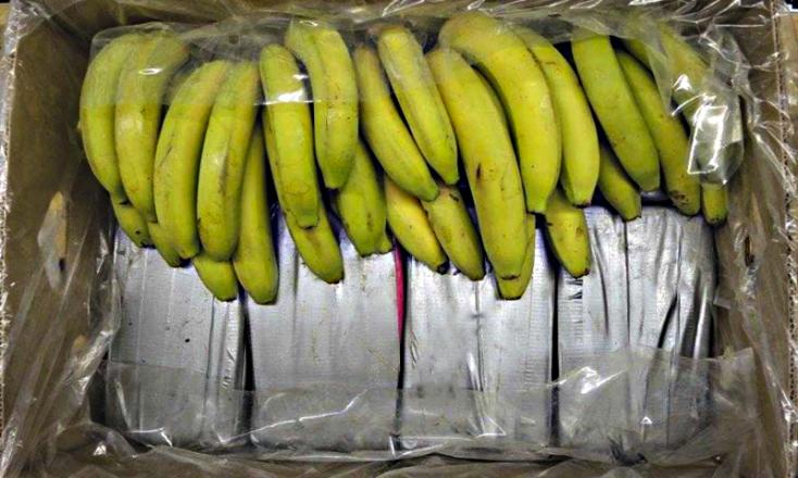 225 kiló kokó volt a Németországba szállított banánok között