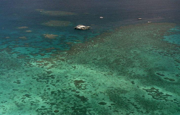 Noé bárkájához hasonló projekttel mentenék meg a világ korallzátonyait