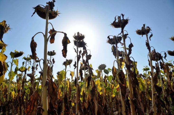 A délnyugat-szlovákiai gazdák kártérítést követelnek a kormánytól