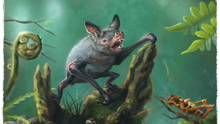 Évmilliókkal ezelőtt élt óriásdenevér fosszíliájára bukkantak
