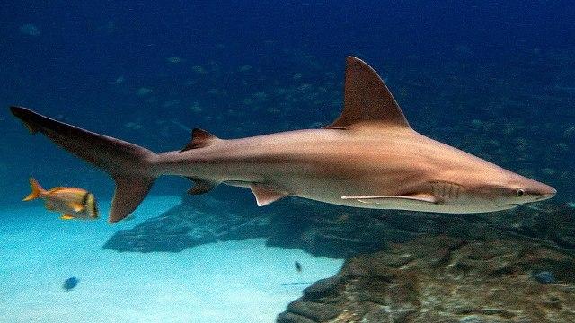 Hemzsegnek a cápák az izraeli partok közelében
