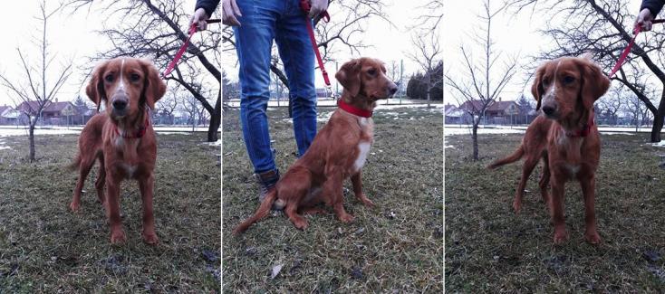Barátságos kutyus keresi új otthonát