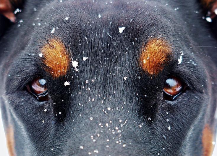 Félévre lesittelik a kutyáit vasrúddal agyonverő magyar férfit!