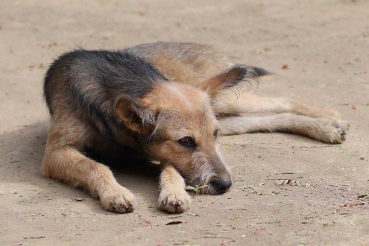 A kutyák már 9 ezer éve is velünk tartottak Európa és Ázsia felé