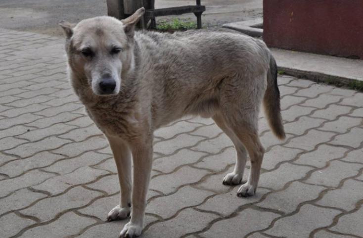 Elhunyt a világ talán legöregebb kutyája, Buksi