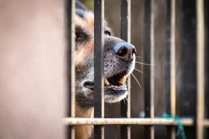 30 ezer kóbor kutyát telepítenek ki egy városból