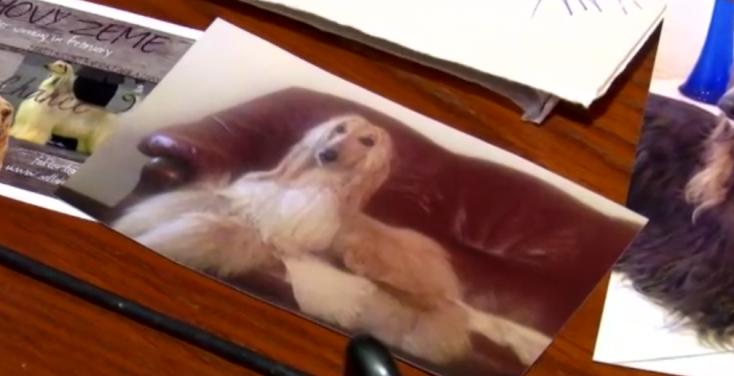 SZÍVSZAGGATÓ: halálra rémült egy kutya a petárda robbanásától