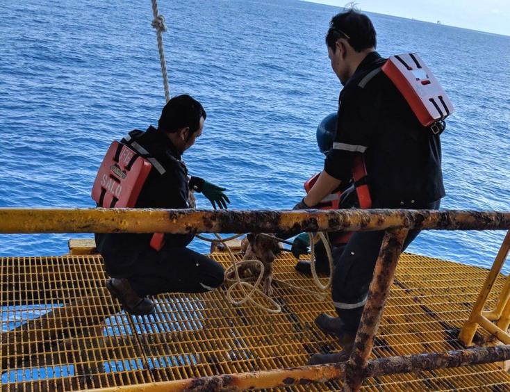 Kutyát találtak a tengeren, 220 kilométerre a szárazföldtől!