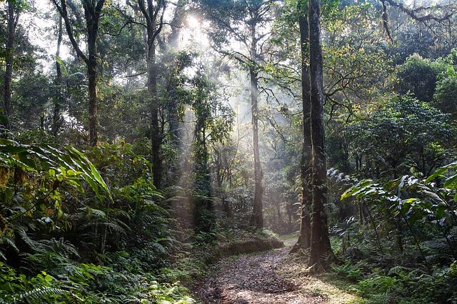A német kormány leállítja a brazil erdőket védő projektek támogatását a fakitermelés miatt
