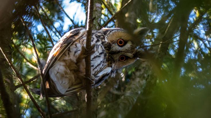 Ritka madárfajok megőrzését célzó programot fogadott el a kormány