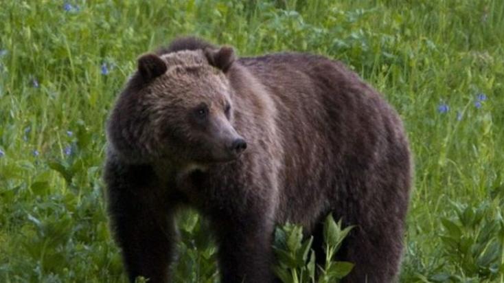 """Emberre támadt egy medve Szlovéniában, de megkímélik az életét, mert """"nem volt más választása"""""""