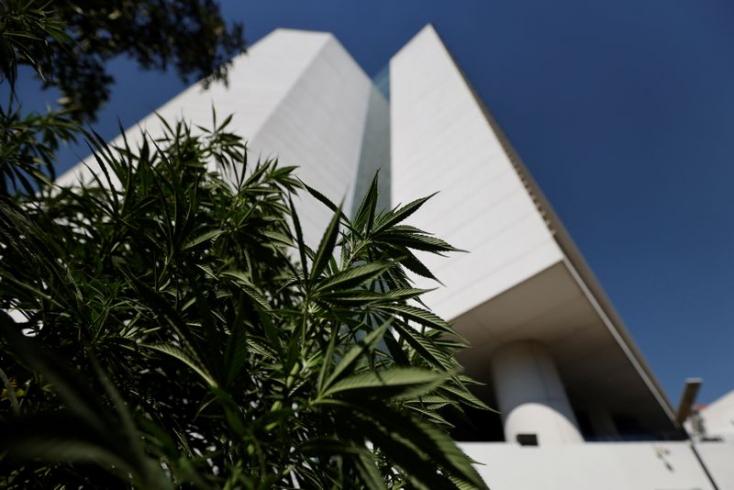 Jóváhagyta a marihuána legalizálásátamexikói szenátus