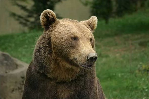 Jóka mellé költözött egy medvecsalád, ami aggasztja a vadászokat és a polgármestert is. Amíg békés az együttélés, addig nem tehetnek semmit sem