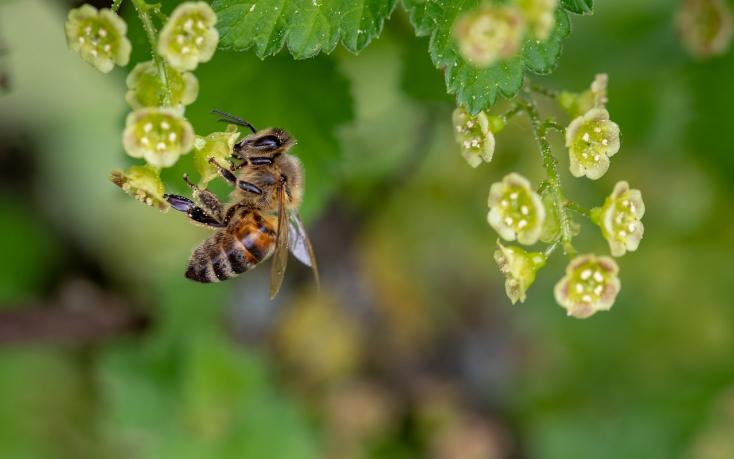 Magyarországon még nem drámai a méhpusztulás