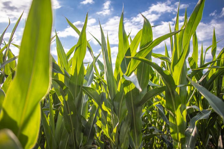285 millió euróval több támogatáshoz jut az agrárszektor