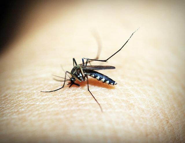 Gyorsan terjed a gyógyszerekre rezisztens malária Délkelet-Ázsiában