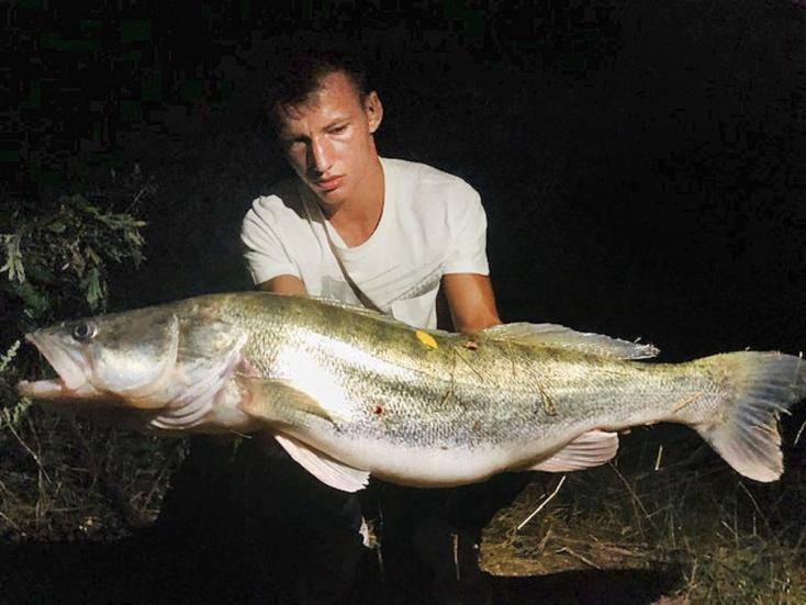 Óriási süllőt fogott egy fiatal horgász a Kis-Dunában!