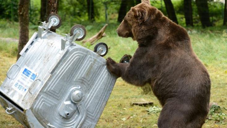 A tátrai medvék a kukákból csemegéznek, de kilövésük nem megoldás
