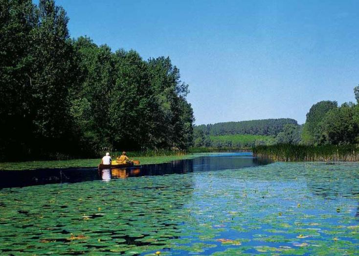"""Doborgaz és Dunacsún között ártéri erdőket vágtak ki, mert """"szükséges"""""""