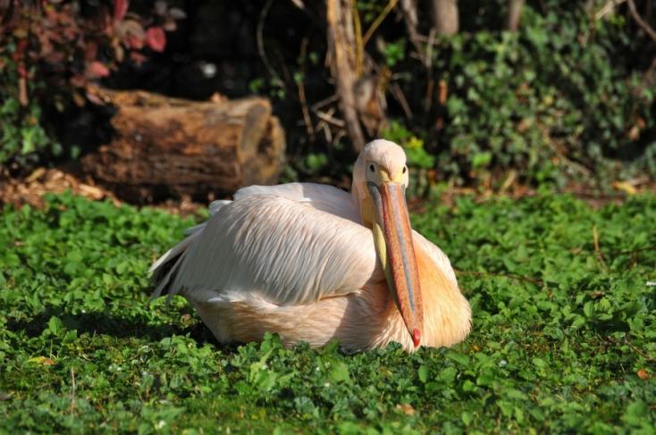 Madárinfluenza ütötte fel a fejét a bécsi állatkertben!