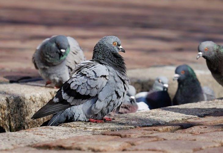 A természeti környezet átalakítása a betegségeket terjesztő állatoknak kedvez