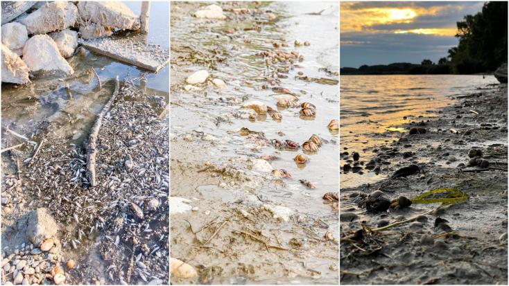 Rákok és halak ezrei pusztultak el a Dunán, és senki nem vállalja a felelősséget
