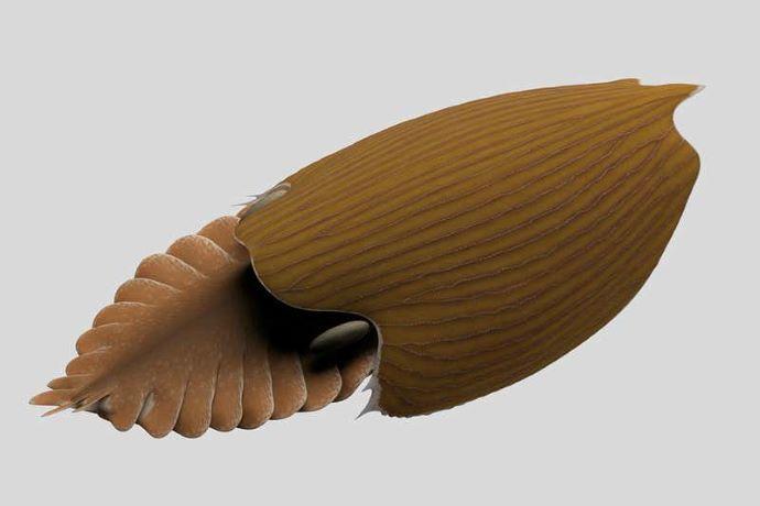 Félmillió éve élt ősi ízeltlábú fosszilis maradványait fedezték fel
