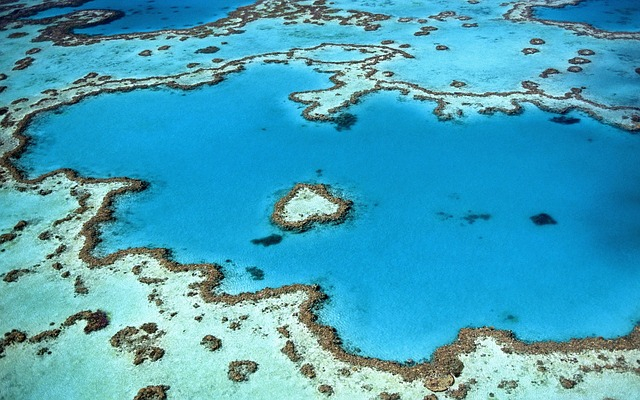 Tizenkét évbe is telhet a korallzátonyok teljes regenerálódása egy tömeges korallfehéredés után