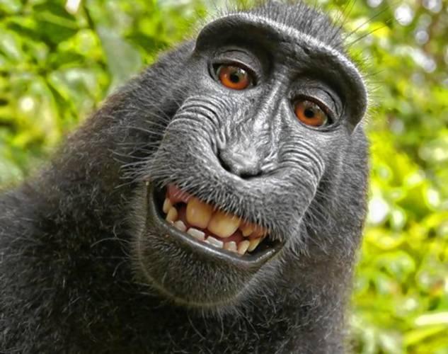 A vigyorgva szelfiző majmot választotta az év emberének az állatvédő szervezet