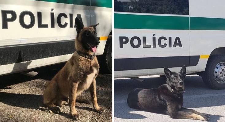 Kajalon egy szökevényt, Galántán pedig egy drogterjesztőt kapott el ez a két rendőrkutya!