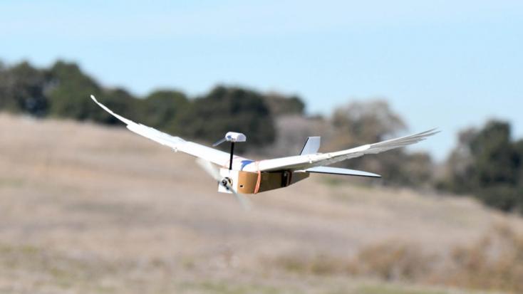 Először fejlesztettek tollas szárnnyal repülő robotot - VIDEÓ