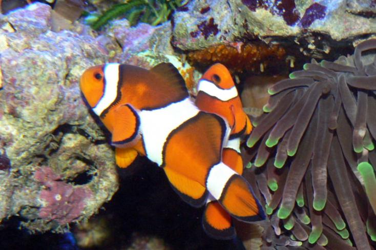 A bohóchalakat is megviseli a klímaváltozás
